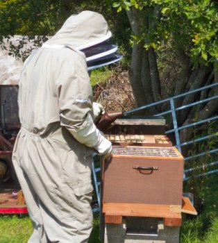A Cornwall Honey beekeeper