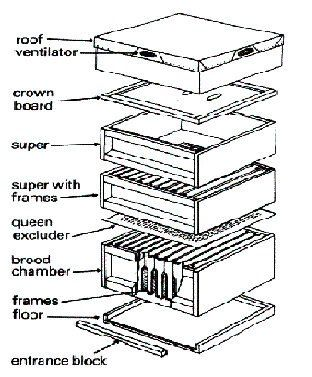 Diagram of a typical hive