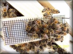 Bees at the hive