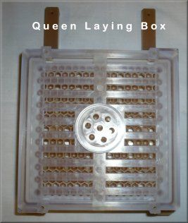 Queen Laying Box