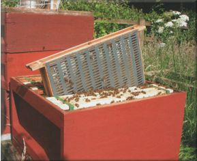 Brood box with a comb trap fitted